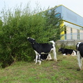 bullocks-by-the-industrial-estate