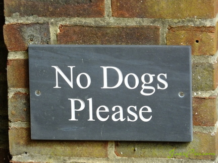 no-dogs-please