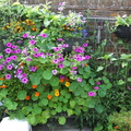 overflowing-window-box